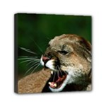 Laught Out Loud  Snarl Cougar Mini Canvas 6  x 6  (Stretched)