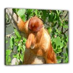 Proboscis Big Nose Monkey Canvas 24  x 20  (Stretched)