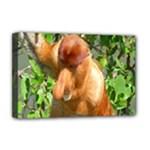 Proboscis Big Nose Monkey Deluxe Canvas 18  x 12  (Stretched)