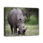 Wild Animal Rhino Canvas 10  x 8  (Stretched)