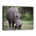 Wild Animal Rhino Canvas 16  x 12  (Stretched)