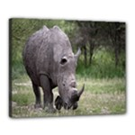 Wild Animal Rhino Canvas 20  x 16  (Stretched)