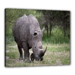Wild Animal Rhino Canvas 24  x 20  (Stretched)