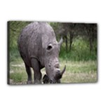 Wild Animal Rhino Canvas 18  x 12  (Stretched)