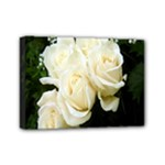 White Rose Mini Canvas 7  x 5  (Stretched)