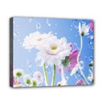 White Gerbera Flower Refresh From Rain Canvas 10  x 8  (Stretched)