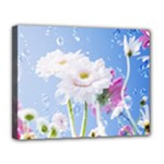 White Gerbera Flower Refresh From Rain Canvas 14  x 11  (Stretched)