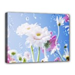 White Gerbera Flower Refresh From Rain Canvas 16  x 12  (Stretched)