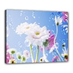 White Gerbera Flower Refresh From Rain Canvas 20  x 16  (Stretched)