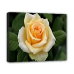 Yellow Rose Canvas 10  x 8  (Stretched)