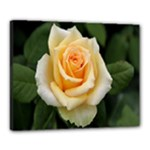 Yellow Rose Canvas 20  x 16  (Stretched)