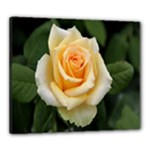 Yellow Rose Canvas 24  x 20  (Stretched)