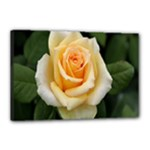 Yellow Rose Canvas 18  x 12  (Stretched)