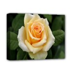 Yellow Rose Deluxe Canvas 14  x 11  (Stretched)