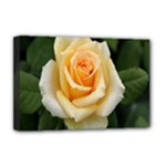 Yellow Rose Deluxe Canvas 18  x 12  (Stretched)