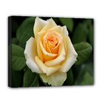 Yellow Rose Deluxe Canvas 20  x 16  (Stretched)