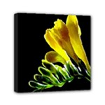 Yellow Freesia Flower Mini Canvas 6  x 6  (Stretched)