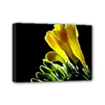 Yellow Freesia Flower Mini Canvas 7  x 5  (Stretched)