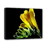 Yellow Freesia Flower Canvas 10  x 8  (Stretched)
