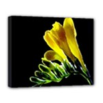 Yellow Freesia Flower Deluxe Canvas 20  x 16  (Stretched)