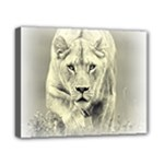 Animal Lion Hunting For Love Canvas 10  x 8  (Stretched)
