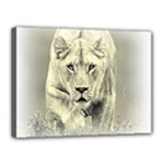 Animal Lion Hunting For Love Canvas 16  x 12  (Stretched)