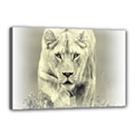 Animal Lion Hunting For Love Canvas 18  x 12  (Stretched)