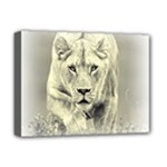 Animal Lion Hunting For Love Deluxe Canvas 16  x 12  (Stretched)
