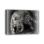 Animal Leopard Mini Canvas 7  x 5  (Stretched)