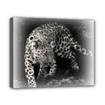 Animal Leopard Canvas 10  x 8  (Stretched)