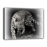 Animal Leopard Canvas 16  x 12  (Stretched)