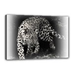 Animal Leopard Canvas 18  x 12  (Stretched)