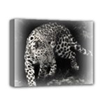 Animal Leopard Deluxe Canvas 14  x 11  (Stretched)