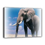 Animals Elephants Lonely But Strong Canvas 16  x 12  (Stretched)
