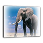 Animals Elephants Lonely But Strong Canvas 20  x 16  (Stretched)