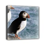 Atlantic Puffin Birds Mini Canvas 6  x 6  (Stretched)