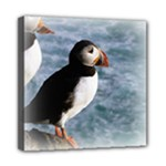 Atlantic Puffin Birds Mini Canvas 8  x 8  (Stretched)