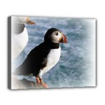 Atlantic Puffin Birds Canvas 14  x 11  (Stretched)