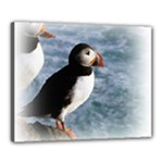 Atlantic Puffin Birds Canvas 20  x 16  (Stretched)