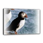 Atlantic Puffin Birds Canvas 18  x 12  (Stretched)