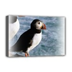 Atlantic Puffin Birds Deluxe Canvas 18  x 12  (Stretched)