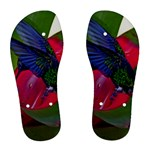 Hummingbird in Blue Women s Flip Flops