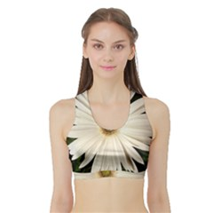 Daisyc Women s Sports Bra With Border by infloence
