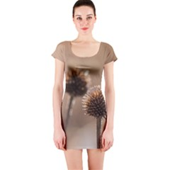 Withered Globe Thistle In Autumn Macro Short Sleeve Bodycon Dress by wsfcow