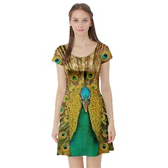 Bird Peacock Feathers Short Sleeve Skater Dress by AnjaniArt