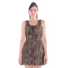 Purple Peacock Feather Wallpaper Scoop Neck Skater Dress by AnjaniArt