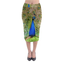 Peacock Animal Photography Beautiful Midi Pencil Skirt by Amaryn4rt