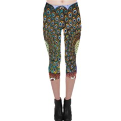 The Peacock Pattern Capri Leggings  by Nexatart