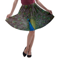 Peacock Feather Beat Rad Blue A Line Skater Skirt by Amaryn4rt