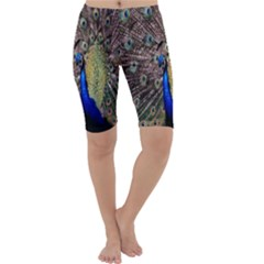 Multi Colored Peacock Cropped Leggings  by Simbadda